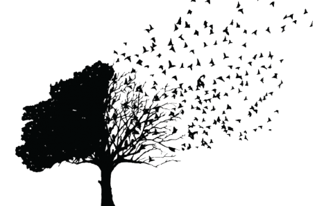 fundal transparent copac